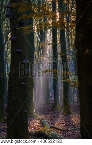 Amazing Sunrise In Forest. Rays Of The Sun Shine Through Trees. Light Fog Adds Some Mystery To The L