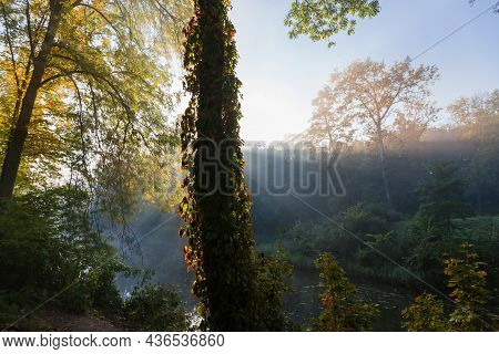 Section Of The Autumn Park With Old Trees And Shrubs Illuminated With Sun Beams From Behind A Tree T