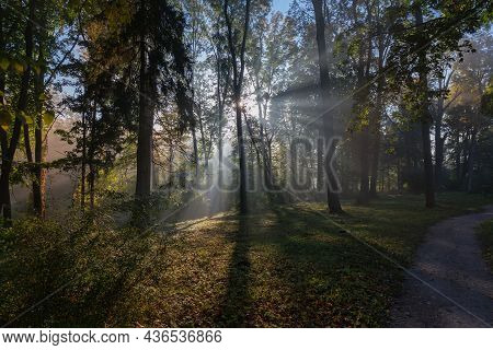 Section Of The Autumn Park With Old Trees And Shrubs Illuminated With Sun Beams Through The Branches