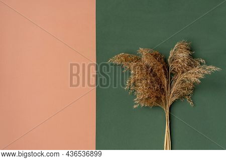 Pampas Grass On Dual Background. Copy Space.