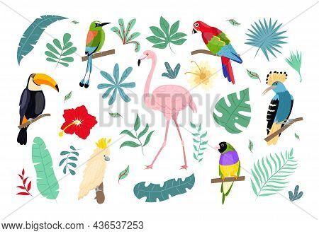 Tropical Birds And Plants. Jungle Wildlife, Caribbean Flora And Fauna, Hawaiian Bright Flowers, Exot