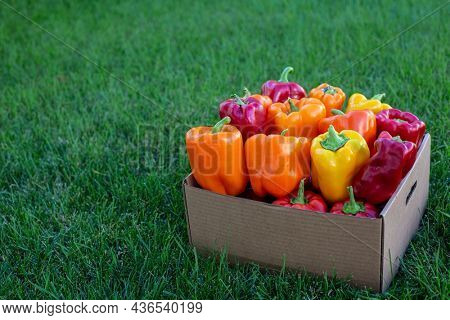A box full of assorted and colorful bell peppers. Healthy Red, yellow and orange peppers ready to eat.