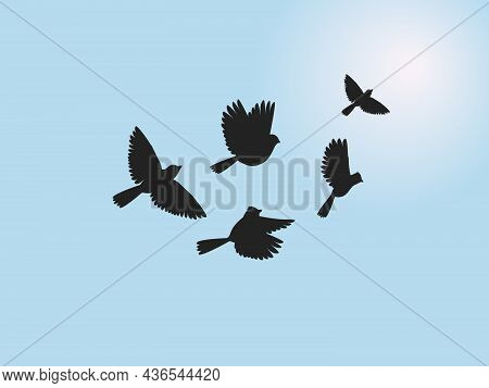 Sun Flying Birds. Freedom Wildlife Bird Set On Sunset Or Sunrise Blue Background, Painting Avian Sil