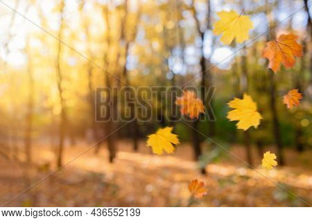 Falling Autumn Leaves Natural Blurred Background. Beautiful Autumn Park With Yellow Leaves And Trees