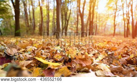 Beautiful Autumn Landscape With Yellow And Red Autumn Leaves In An Autumn Park On A Sunny Day.