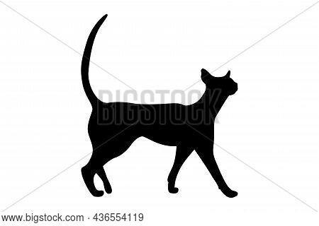 Vector Silhouette Of A Cat. Pet. Silhouettes Of Cats. Beautiful Feline Silhouette Of A Walking Cat.