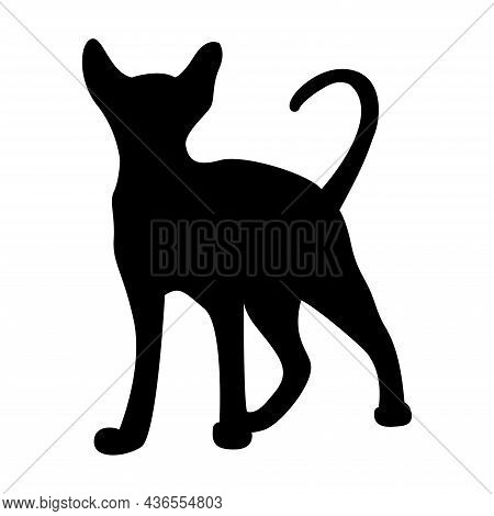 Vector Silhouette Of A Cat. Pet. Silhouettes Of Cats. Playful Feline Silhouette.