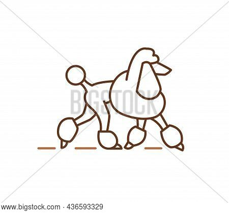 Poodle Icons Design, Purebred Dogs Pets Sign. Pudel Breed, Contour Vector Illustration For Veterinar