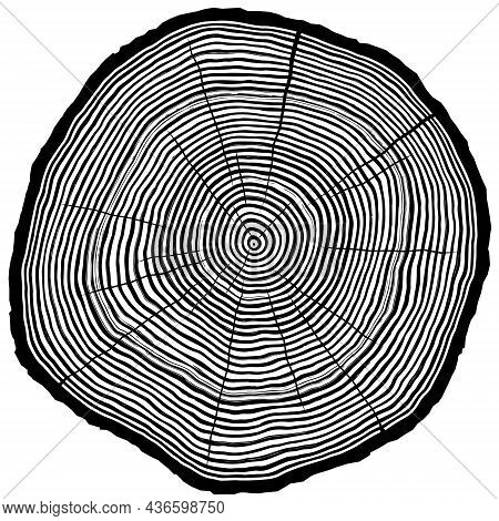Vector Silhouette Of Sawcut Tree Trunk With Rings