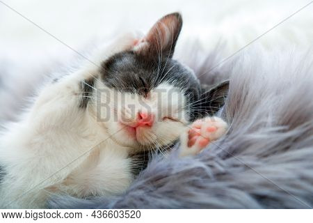Little Happy Kitten In Sleep Lift Up Paws Showing Paw Pads Up On Gray Fluffy Plaid. Cat Comfortably