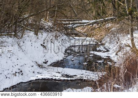 The Onset Of Spring In The Forest. A Forest River In Early Spring. The Forest Stream Is Free Of Ice.