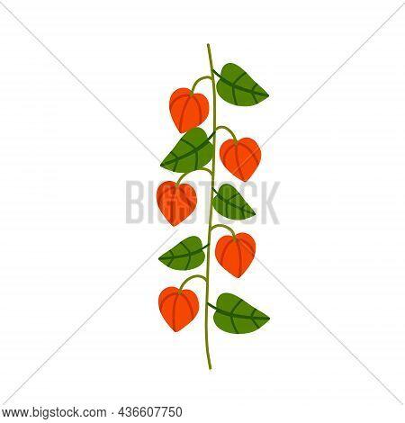 Physalis Branch. Orange Flower. Ornamental Plant. Flat Cartoon Illustration