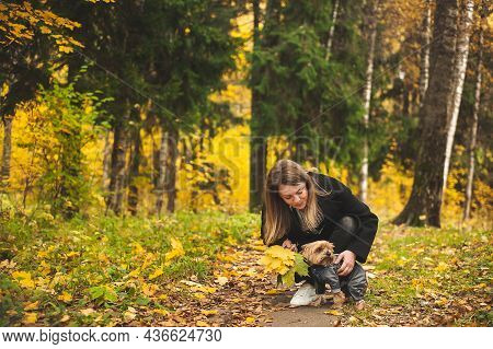 A Beautiful Woman In A Black Coat Walks With A Small Yorkshire Terrier Dog In The Autumn Forest. Dog