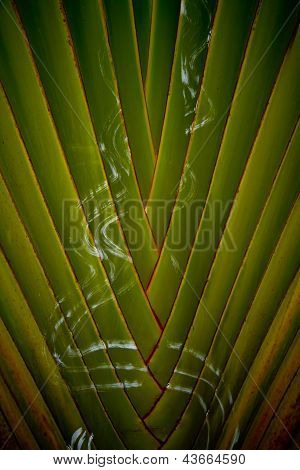 Tropical Background Texture