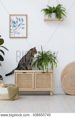 Cute Tabby Cat Near Houseplant On Cabinet Indoors