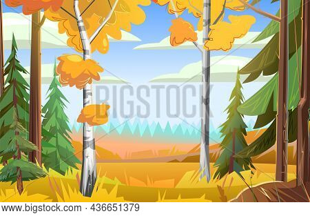 A Glade With Birches And Pines. Autumn Landscape. Beautiful Bright Rural Scene With Orange And Yello