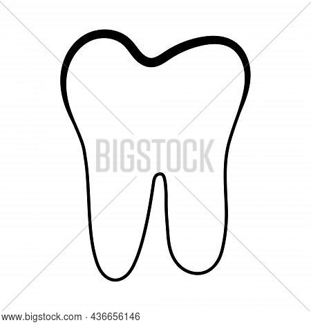 Anatomical Shape Of Dental Dentin Enamel Pulp, Vector Structure Of Teeth With Logo For Dental Clinic