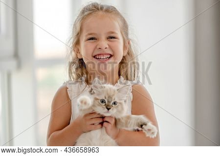 Little child girl holding ragdoll kitten and smiling at camera. Pretty female kid with feline domestic kitty pet at home