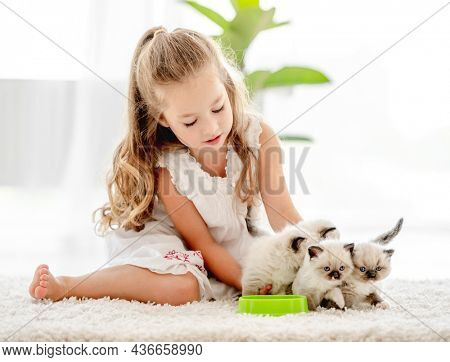 Child girl feeding ragdoll kittens from bowl. Little female person cares about kitty pets at home