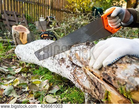 The Process Of Manual Sawing Of A Log. Saw And The End Of A Tree Close Up. A Man Cuts A Tree Trunk W