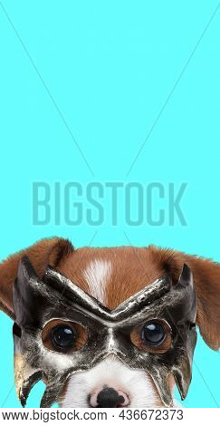 portrait of a cute jack russell terrier dog hiding his face behind a mask against blue background