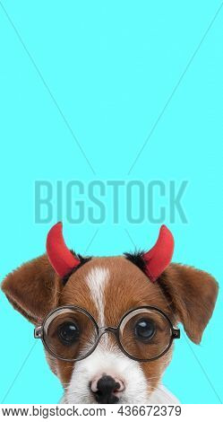 portrait of a cute jack russell terrier dog wearing devil horns and eyeglasses against blue background