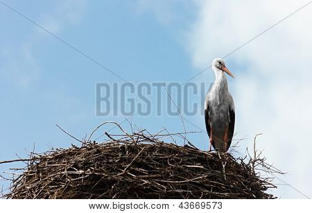 Single standing stork in her nest in spring season.Copy space for text on the left side.Blue cloudy sky as background. poster