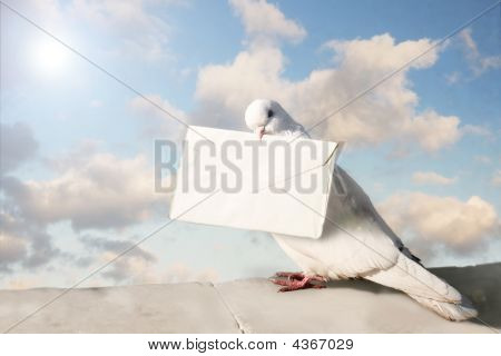 White Homing pigeon with letter on blue sky poster