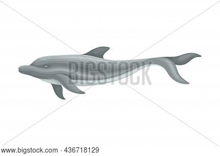 Oceanic Dolphin As Aquatic Placental Marine Mammal With Flippers And Large Tail Fin Closeup Vector I
