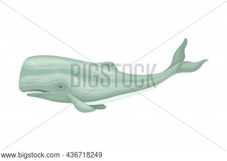 Sperm Whale Or Cachalot As Aquatic Placental Marine Mammal With Flippers And Large Tail Fin Closeup