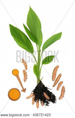 Turmeric plant with herb powder and roots growing in soil. Used in food seasoning and alternative herbal plant medicine. Is anti inflammatory, is an antioxidant and has many health benefits. On white