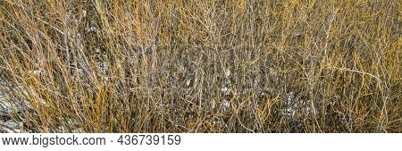 tapestry of shrubs and bushes in Colorado's Rocky Mountains in early spring with some snow, panoramic web banner
