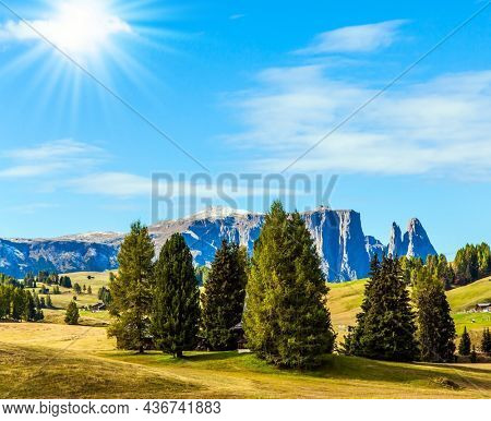 Picturesque coniferous grove. The Dolomites, Italy. Sunny day for photographing and hiking. Magnificent rocky ridge borders a hilly valley Alpe di Siusi. The concept of walking, ecological  tourism