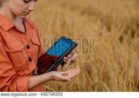 Agronomist Farmer With Digital Tablet Computer In Wheat Field Using Apps And Internet. Smart Farming