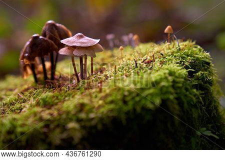 Forest Mushrooms On A Stump. A Variety Of Wild Mushrooms Growing In A Damp Pacific Northwest Forest.