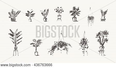 Drawn Home Plants House Greenery Pots Vector