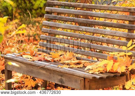 Autumn Seasonal Colorful Background. A Wooden Bench To Relax In Silence In Tranquility In A Garden I