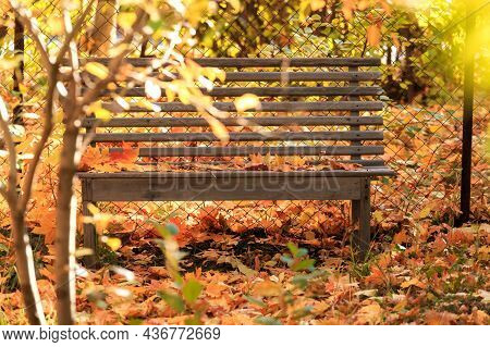 Autumn Seasonal Colorful Background. Bench To Relax In Silence In Tranquility Under A Tree In A Gard