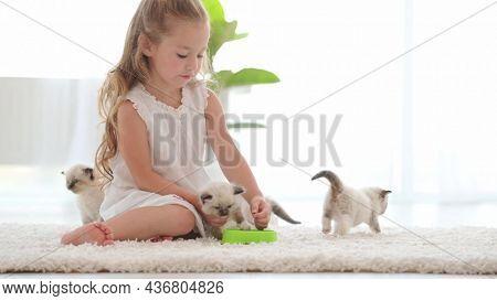 Pretty little child girl feeding ragdoll kittens. Beautiful female kid gives food kitty cat pet at home