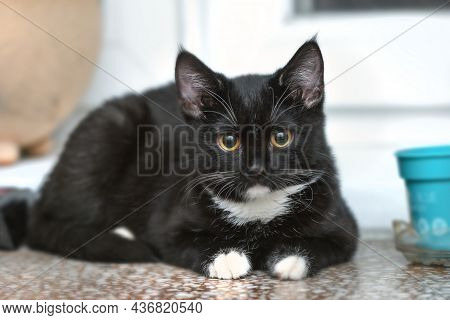 Real Pretty Young Black Cat With White Whiskers And Paws