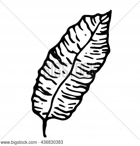 Vector Pattern Of Tropical Leaves. The Tropical Leaf Is Long Drawn . Isolated Black Outline On A Whi