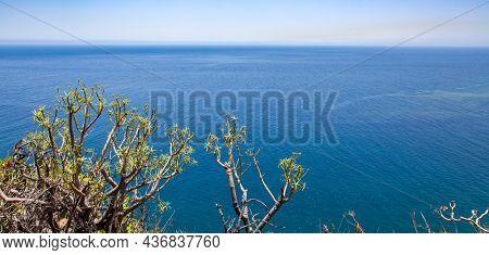 Atlantic Ocean and tropical plants on the coast of La Palma island, Canary Islans, Spain. Landscape