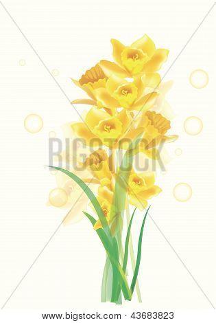 Vector lilies