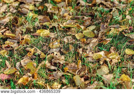 Autumn Leaves On Grass. Yellow And Brown Fallen Leaves On Green Grass Background.