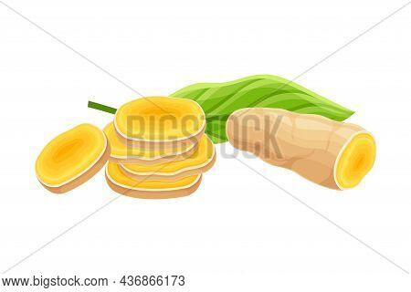 Turmeric Or Curcuma Longa Sliced Rhizome Used In Asian Cuisine Closeup Vector Illustration