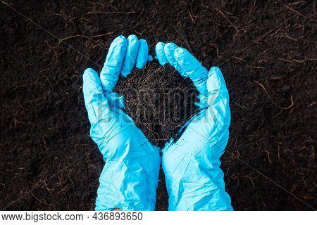 Hand Of Farmer Or Researcher Woman Wear Gloves Holding Abundance Fertile Black Soil For Agriculture