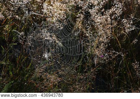 Beautiful Cobweb With Dew Drops On Grass In Morning