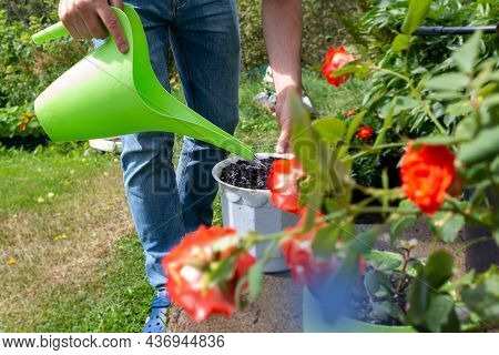 Young Caucasian Farmer In Jeans Plants Plant In White Pot Standing In Garden And Watering Earth From