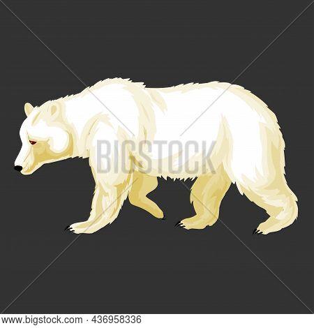Polar Bear Isolated Animal Illustration On White Background. Polar Bear Illustration.