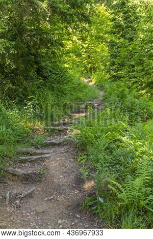 Forest Track In Bavaria At Summer Time
